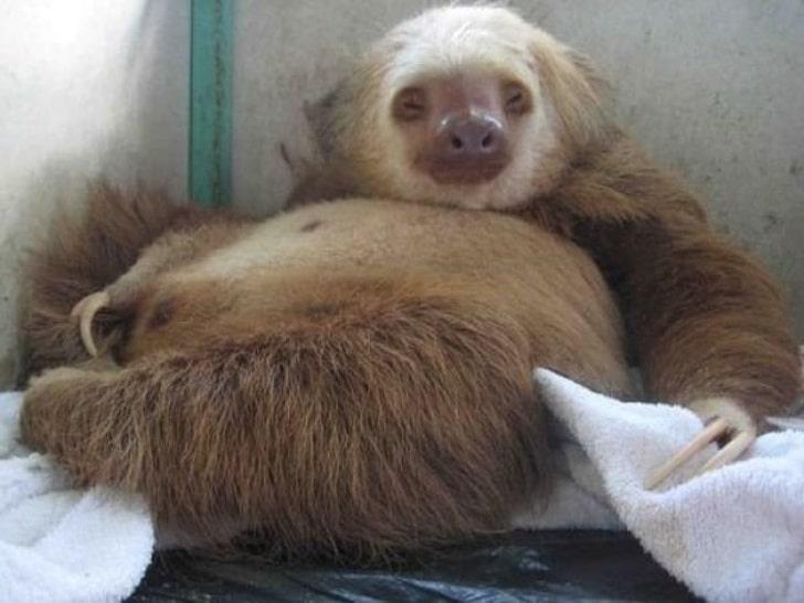 az állatok világában is látványos változásokkal jár a vemhesség15
