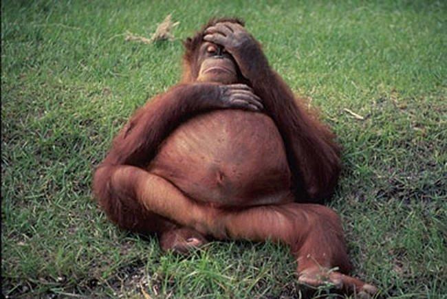 az állatok világában is látványos változásokkal jár a vemhesség2