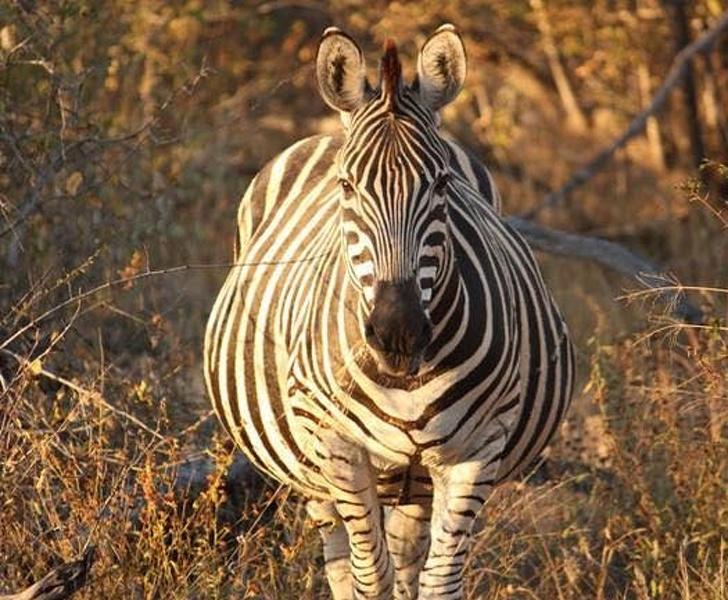 az állatok világában is látványos változásokkal jár a vemhesség4