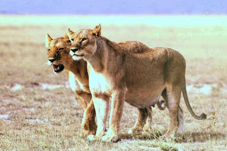 az állatok világában is látványos változásokkal jár a vemhesség6