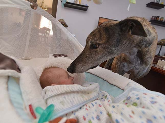kisbaba érkezése tette boldoggá a kutyát
