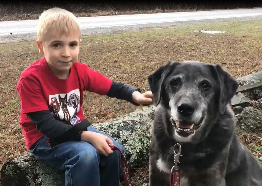 kisfiú kutyákat ment