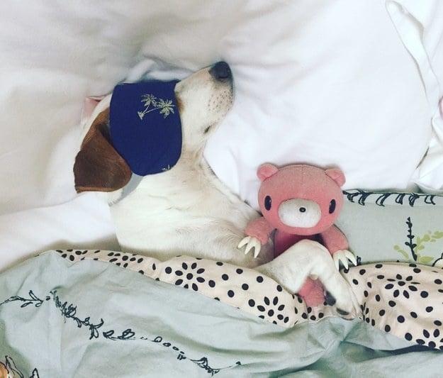 kutyák nem hajlandóak a saját ágyukban aludni