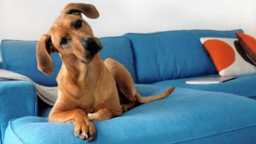 kutya megvéd az asztmától