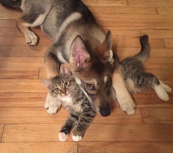 kutya választott egy barátot