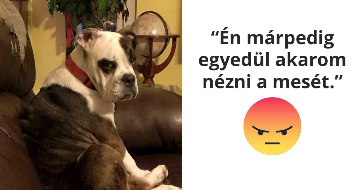 mérges tekintetű kutyák