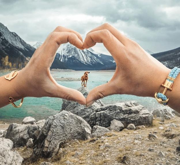 magyar vizsla a legmenőbb instagram sztár