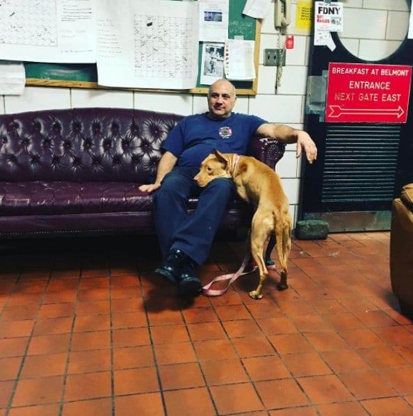 tűzoltók fogadják be a kidobott kutyát3