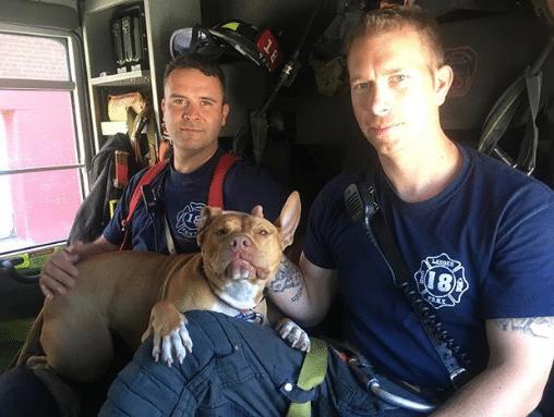 tűzoltók fogadják be a kidobott kutyát