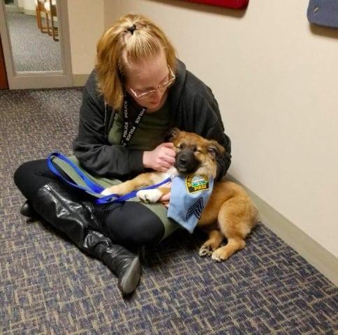 Örökbe fogadott kutya oldja a stresszt az egyik rendőrőrsön
