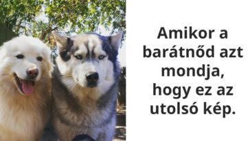 állatok a legjobb humoristák