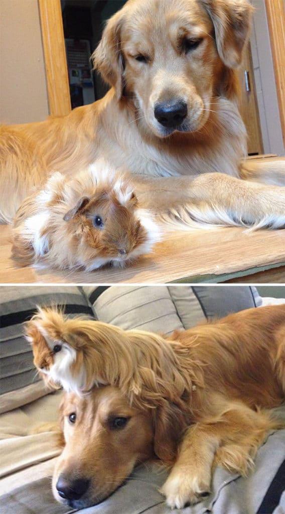 állatok együtt nőttek fel