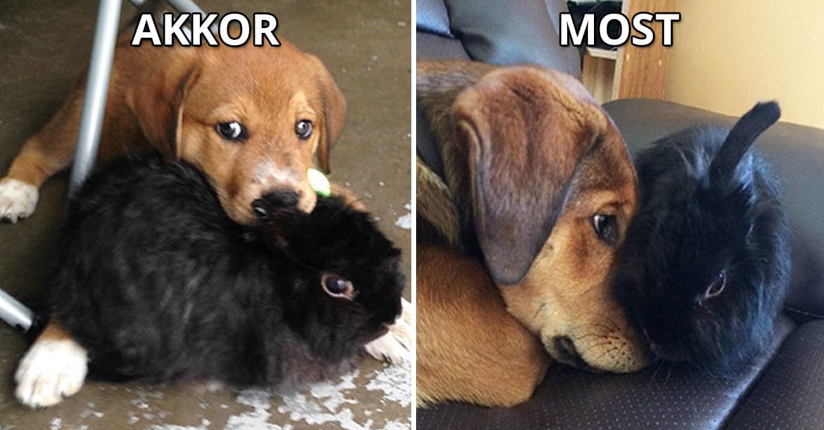 állatok együtt nőttek
