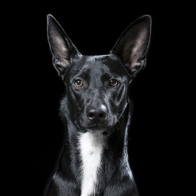 állatok személyiségét mutatja meg képein egy fotós