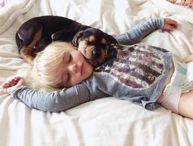 érdekes tények a legjobb barátainkról, a kutyákról