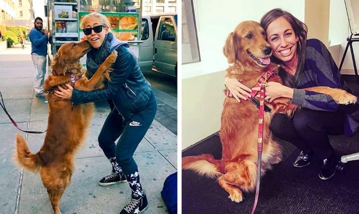 14 bizonyíték, hogy a kutyák túlságosan jók erre a világra