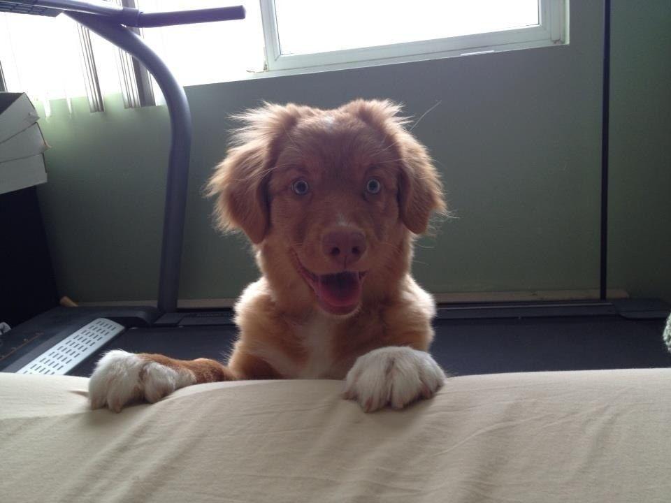 14 kutya, aki embernél is emberibbnek tűnik
