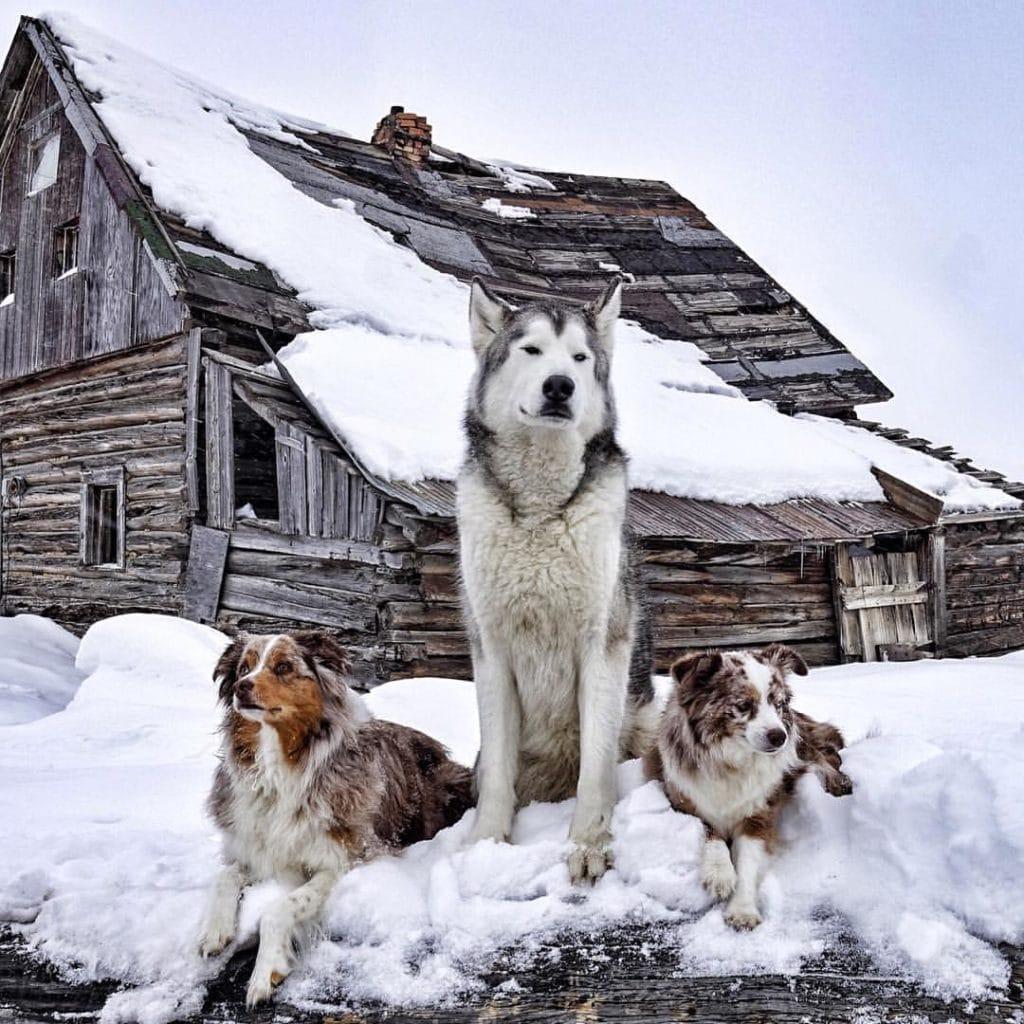 26 fotó egy kutya és gazdája kalandokkal teli életéről