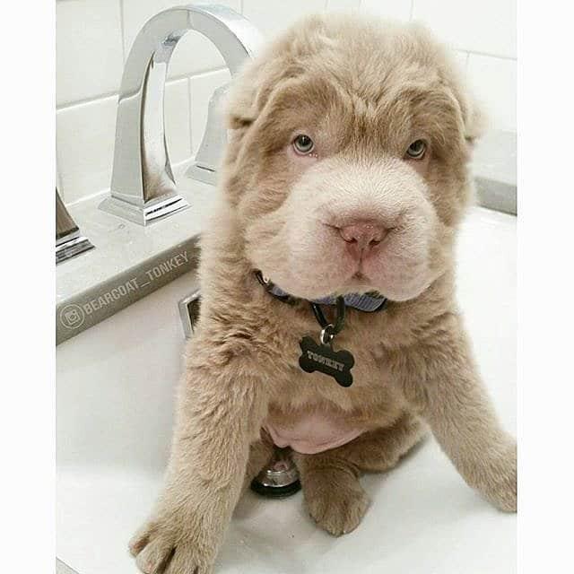 6 kutya, akik teljesen más állatra hasonlítanak