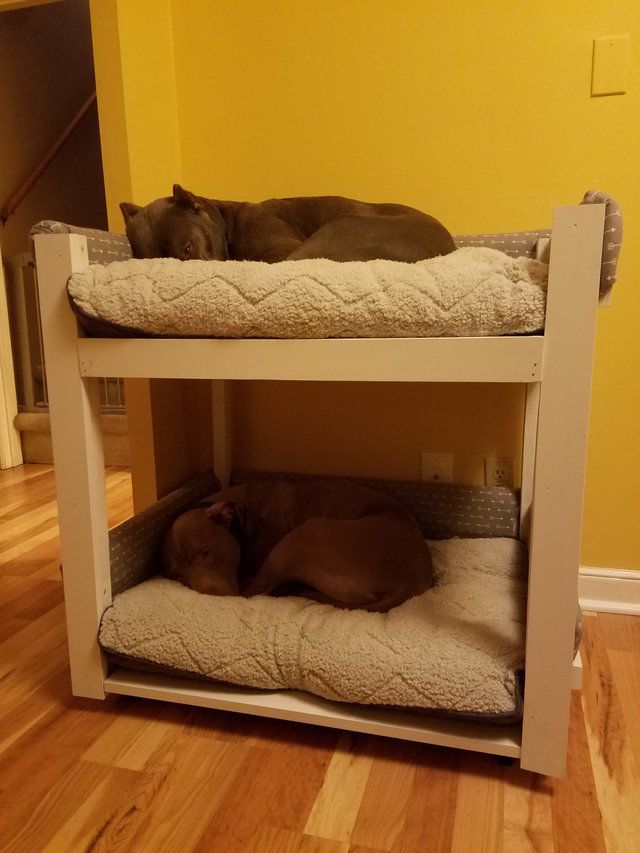 A két kutya nem tud egymás nélkül aludni