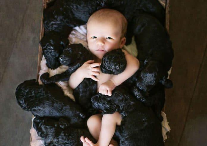 A kutyus és a gazdi, egy napon adott életet csemetéinek1