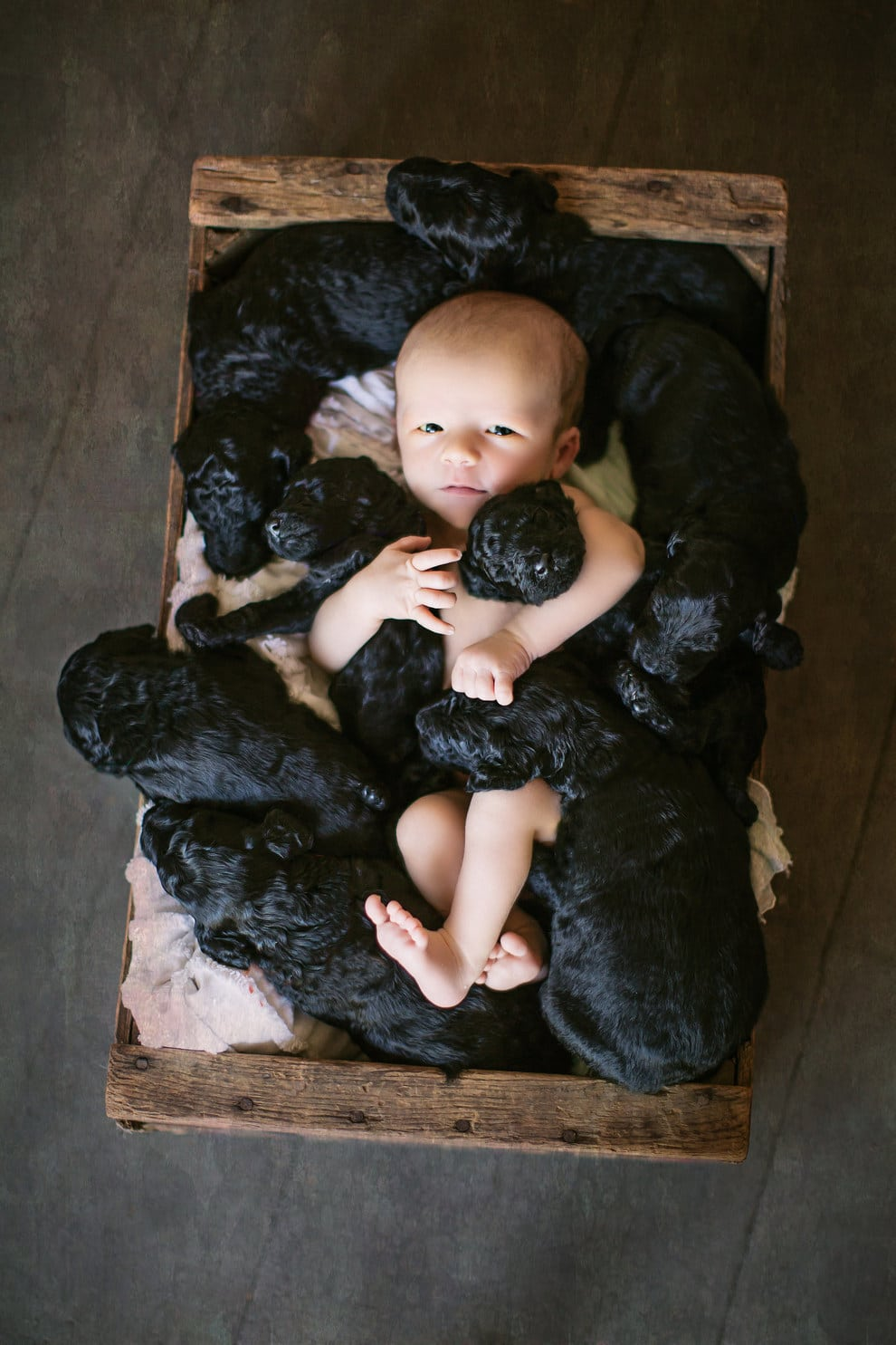 A kutyus és a gazdi, egy napon adott életet csemetéinek4