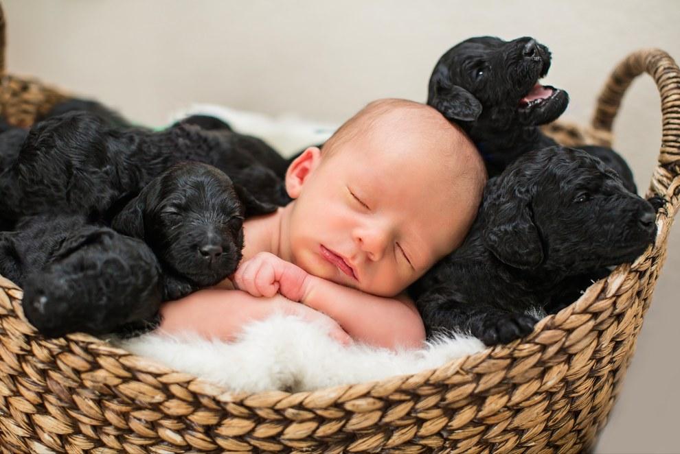 A kutyus és a gazdi, egy napon adott életet csemetéinek6