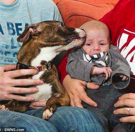 Az éjszaka közepén a pitbull felébreszti a terhes lányt