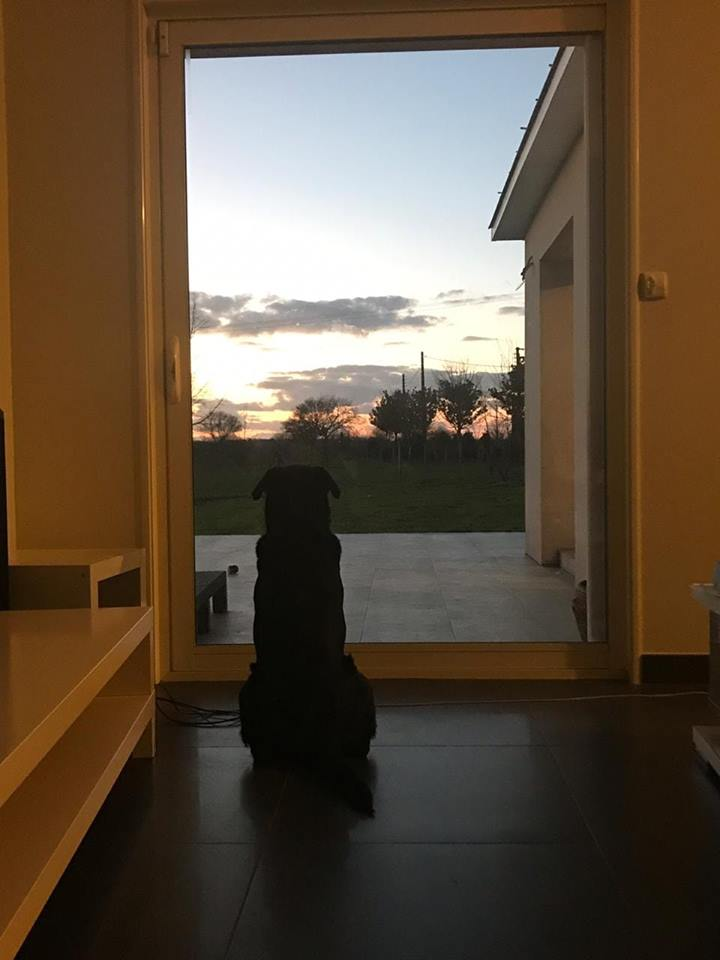 Emiliano Sala kutyája kitartóan várja meghalt gazdáját