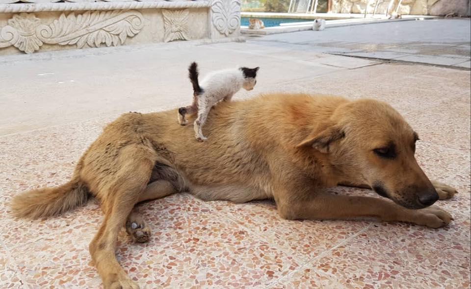 Gyászoló kutya adoptált egy árva kiscicát