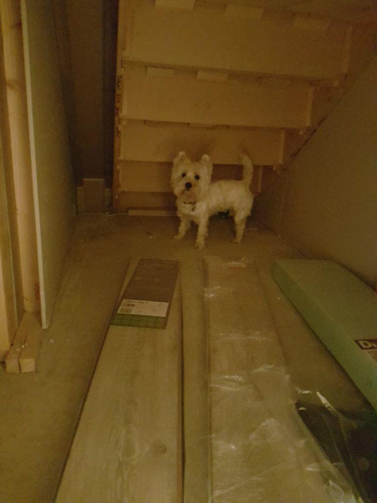 Hihetetlen lakosztályt kapott a mázlista kutya