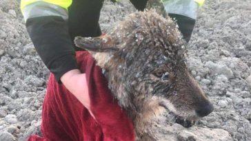 Kimentették egy kutyát a fagyos folyóból