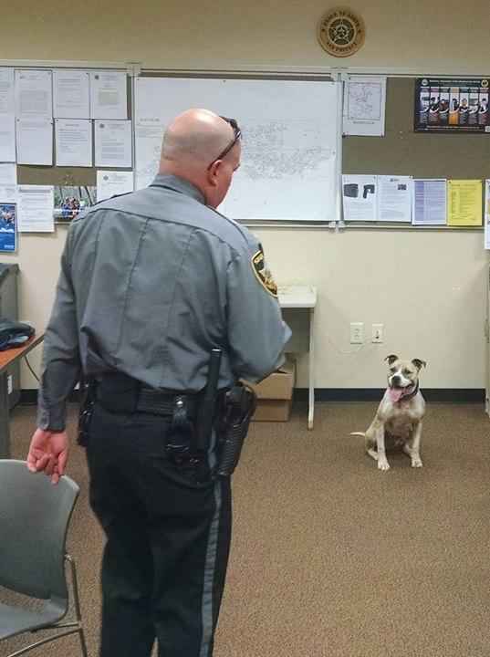Rendőrkutyák lettek a halálra ítélt menhelyi kutyákból