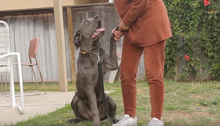 Senki sem hitt a deformált végtagú kutyusban