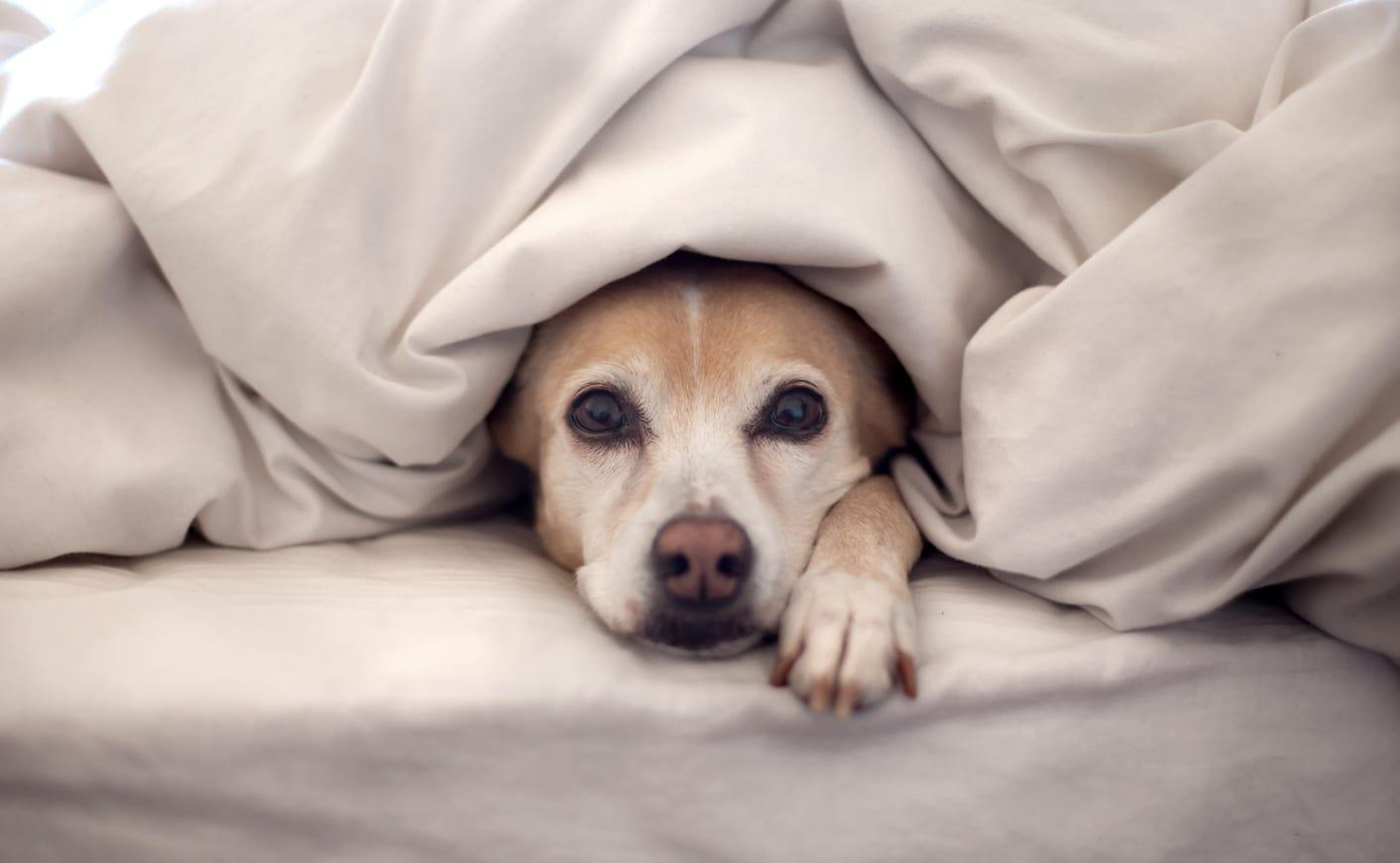 Szabad-e a kutyával aludni