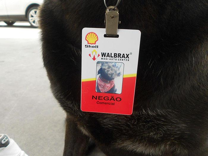 Tiszteletbeli benzinkutasként dolgozik a kutya