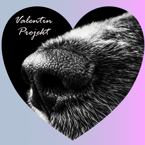 a Valentin-napi virág árából idén megmenthetsz egy kutyát