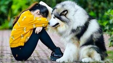 a kutyák a legjobb dolgok ezen a világon