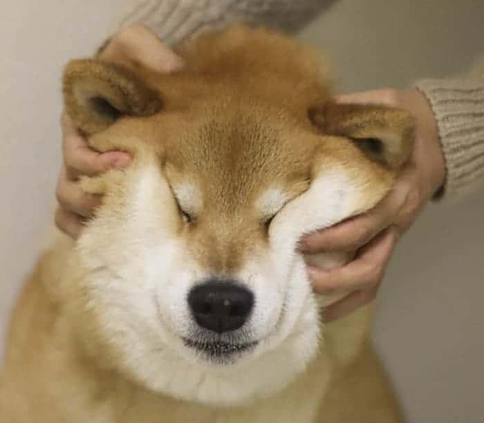 a kutyák szobahőmérsékleten nyúlnak