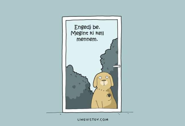 ilyen az élet egy kutyával