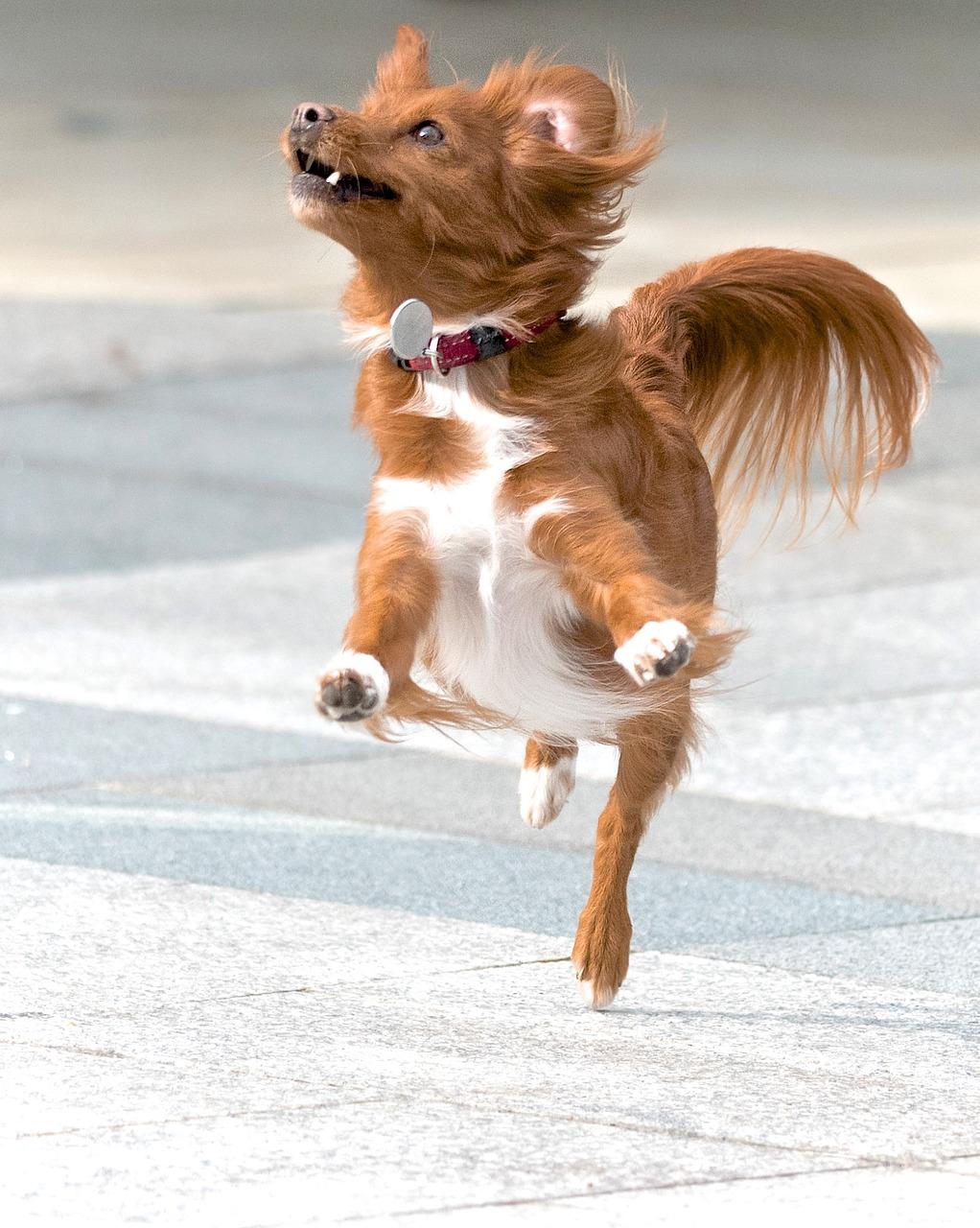 imádnivalóan boldog kutya, hogy szebb legyen a hétvégéd