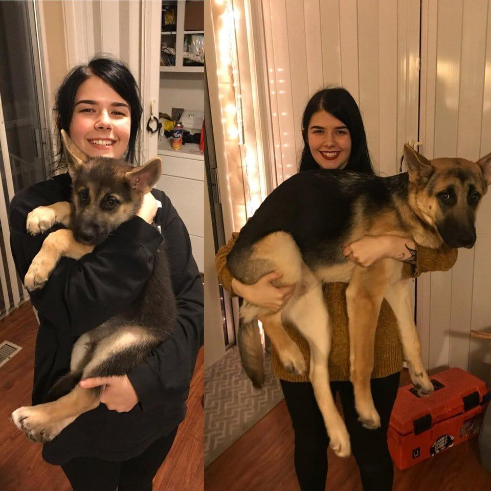 kutyák akik nem tudják mekkorák