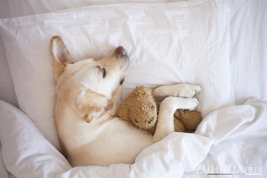 kutyának mindene az alvás