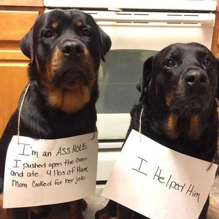 minden jó kutyának van egy gonosz, sötét oldala