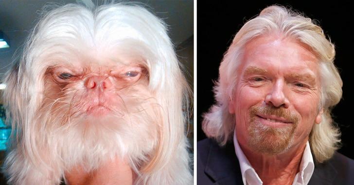 Állatok, akik pontosan olyanok, mint a hírességek