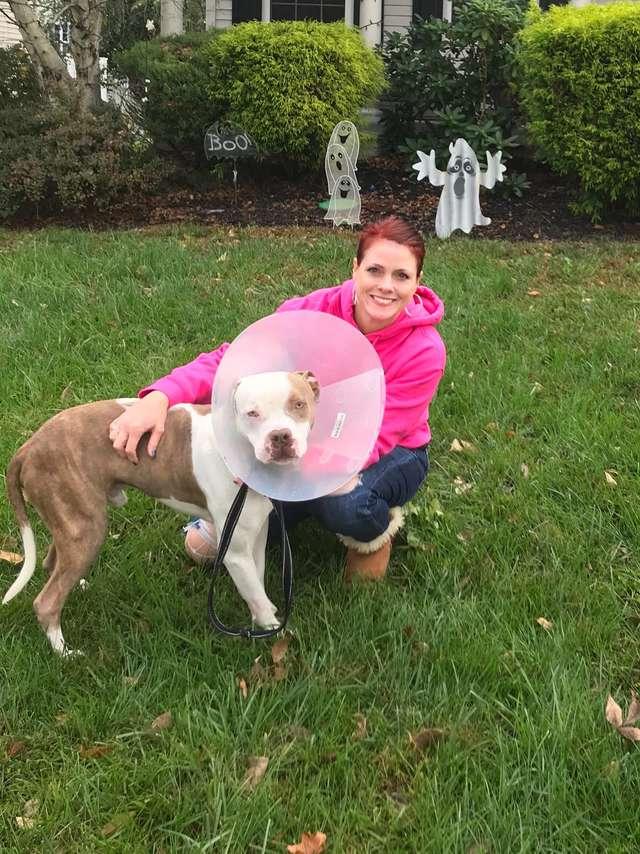 Úgy láncolták ki a pitbullt, hogy a fejét se bírta mozgatni