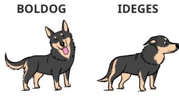 így kommunikálnak a kutyák