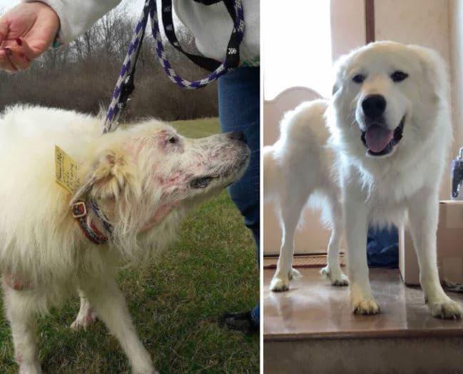 örökbe fogadták a kutyákat és teljesen megváltoztak