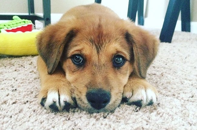 örökbefogadott kutya első fotója