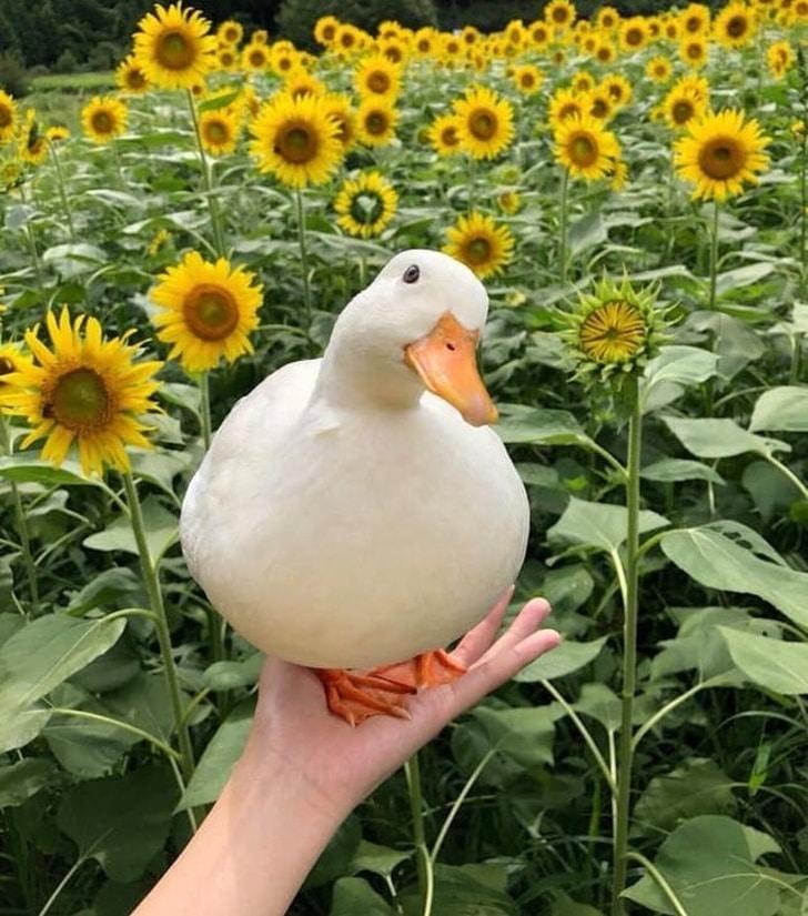 16 boldog állatos fotó